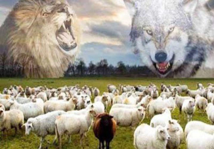 truyện con sói và bầy cừu